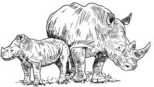 Rhinoart